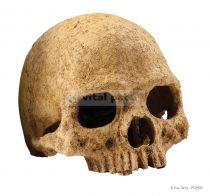 EXO-TERRA Primate Skull - koponya