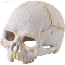 EXO-TERRA koponya emberi